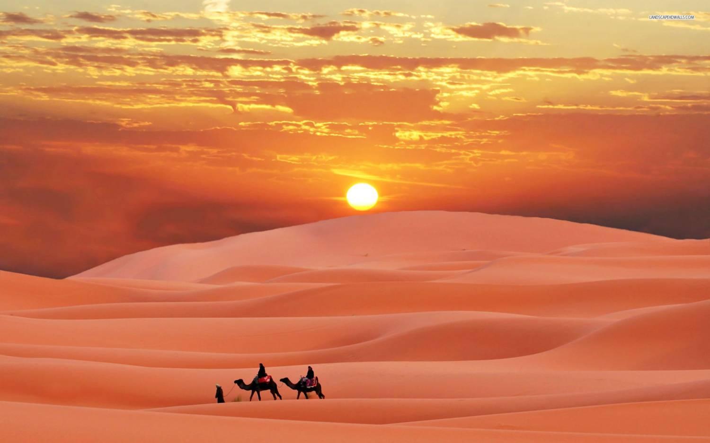 Image result for hijrah camel