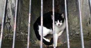 kucing palestina