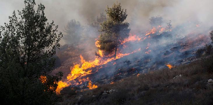 kebakaran-haifa2